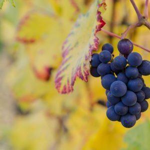 The Wine of Jesus Love