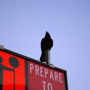 are you ready? Are You Ready? ARE YOU READY???
