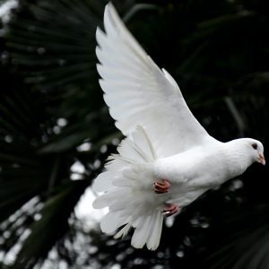 The Coming of the Holy Spirit – 2003
